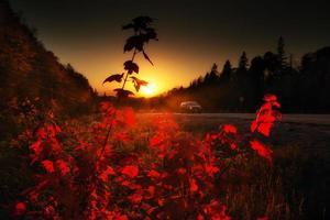 coucher de soleil sur la route à travers les feuilles rouges