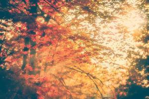 les rayons du soleil brillent à travers les feuilles d'automne