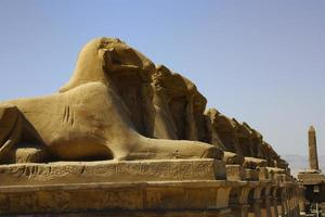 avenue des sphinx photo