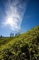 paysage avec des champs verts de thé au sri lanka photo