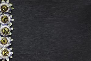 bordure de passiflore bleue sur fond d'ardoise