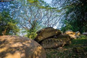 rocher et arbres dans la forêt photo