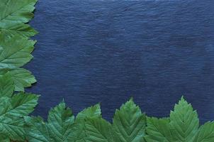 feuilles d'érable sur fond d'ardoise photo