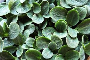 plantes de bébé de courge musquée photo
