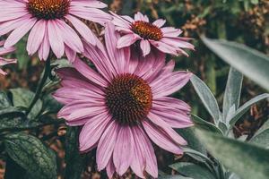 fleur violette dans la lentille tilt shift