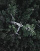 photo en grand angle d'arbres verts avec un avion écrasé
