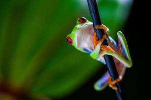 concept tropical saturé avec grenouille photo