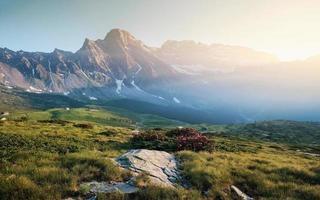 paysage avec végétation alpine