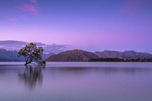 arbre dans un plan d & # 39; eau près des montagnes photo
