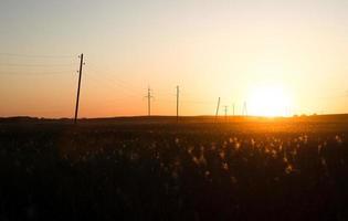 champ et lignes téléphoniques au lever du soleil