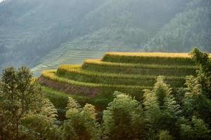 Rizières en terrasses Wengjia Longji Longsheng Hunan Chine