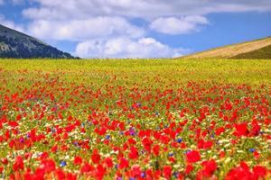 plaine fleurie