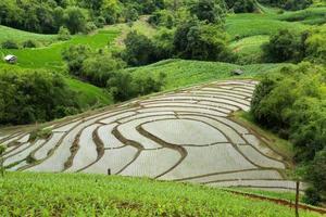 rizière et cabane en bois. photo