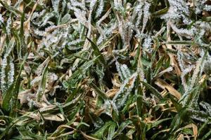 glace sur l'herbe