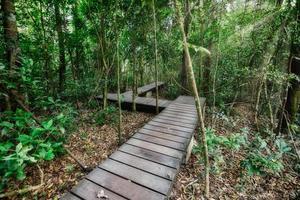 sentier en bois comme forêt