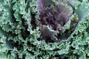 fond de légumes chou longue vie