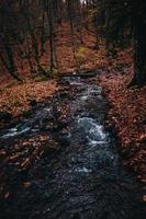rivière entourée d'arbres bruns en automne photo