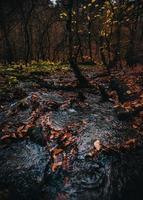 feuilles brunes sur la rivière qui coule entourée d'arbres verts