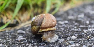 escargot sur le trottoir photo