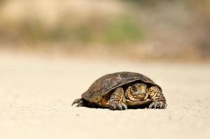 tortue sur sol en terre
