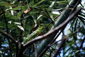 lézard vert sur branche