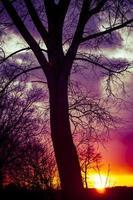 silhouette d'arbre pendant le coucher du soleil