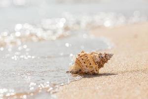 coquille sur une plage de sable.