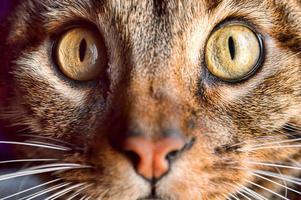 yeux de chat photo