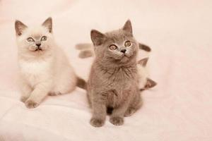 chatons assis photo