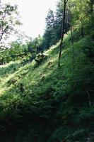 champ herbeux avec des arbres