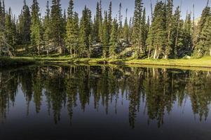 Réflexions d'arbres sur les lacs du château