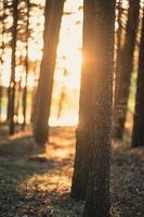 la lumière du soleil à travers un champ d'arbres photo