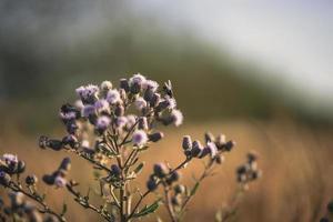 une mouche atterrit sur des fleurs violettes photo