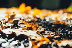 gros plan, de, feuilles séchées, automne photo