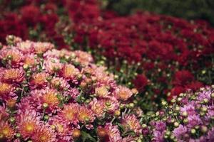 fleurs dans un jardin maussade