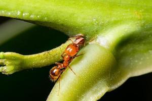 fourmi sur une plante verte