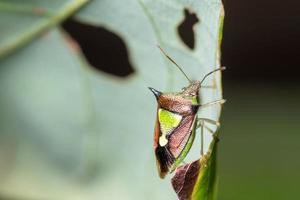 bug macro puant