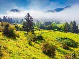 Matin d'été brumeux dans le parc national du Triglav