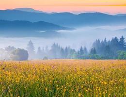 Lever du soleil d'été coloré dans les montagnes des Carpates brumeuses