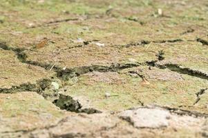 gros plan de sol sec