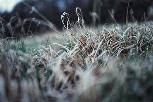 herbe brune haute