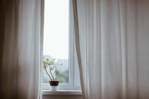 plante en pot sur le rebord de la fenêtre avec des rideaux