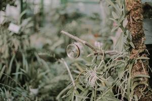 boussole en métal accrochée à une branche d'arbre