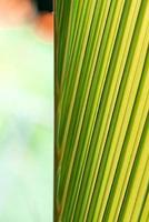 plante abstraite verte et jaune photo