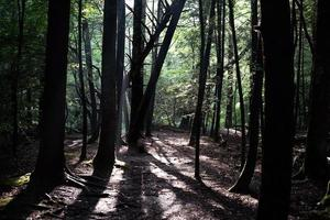 arbres dans la forêt
