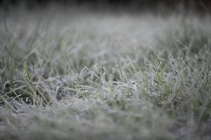 premier gel sur l'herbe photo