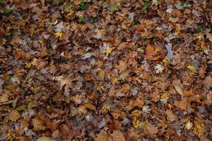 tas de feuilles d'érable photo