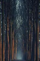 lever tôt le matin en forêt photo