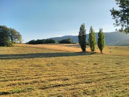 trois arbres en été photo