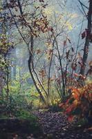 scène dautomne dans une forêt